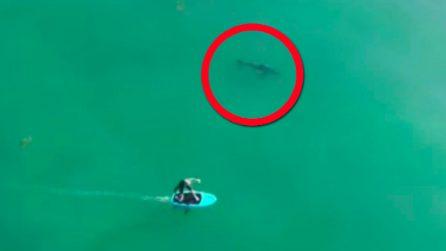 Il drone riprende il surfista: all'improvviso un grosso squalo si avvicina