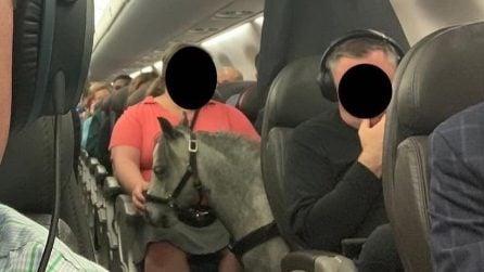 Un pony in aereo: il curioso episodio su un volo dell'America Airlines