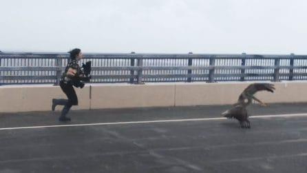 Una donna sfida l'uragano Dorian per salvare la vita dei pellicani in pericolo