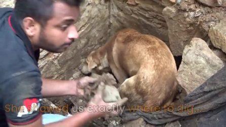 I cuccioli sono intrappolati sotto le macerie: mamma cane disperata scava senza sosta
