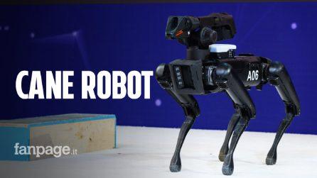 Da oggi è in vendita Spot, il robot a quattro zampe: apre le porte, balla e sale le scale