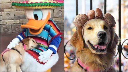In estasi tra le braccia di Paperino: ecco Nala, il cane guida innamorato dei personaggi Disney