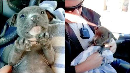 Trovano un cagnolino congelato sotto al ponte: l'emozionante salvataggio dei poliziotti