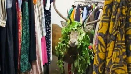 Un cervo resta intrappolato in un negozio di abbigliamento: la polizia arriva a salvarlo