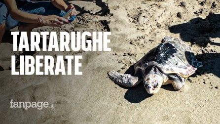 """Liberate in mare due tartarughe trovate ferite: """"Molte perdono la pinna"""""""