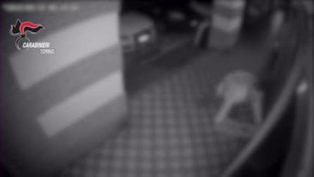 Sfondava le vetrine e rubava la refurtiva: i video delle telecamere di sicurezza
