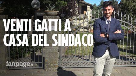 """A Bagno di Romagna venti gatti cercano casa, il sindaco: """"Li prendo io"""""""