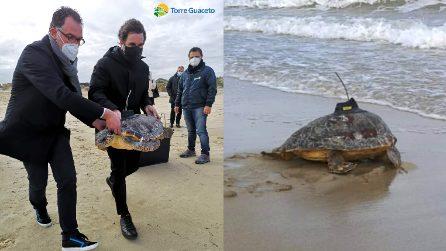 Caretta caretta liberata in mare: sul guscio un trasmettitore satellitare