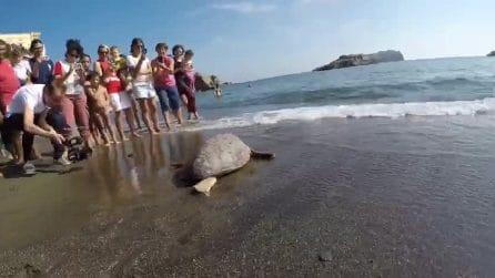 Ventotene: la storia di Aprea, la tartaruga salvata dalla plastica e liberata in mare