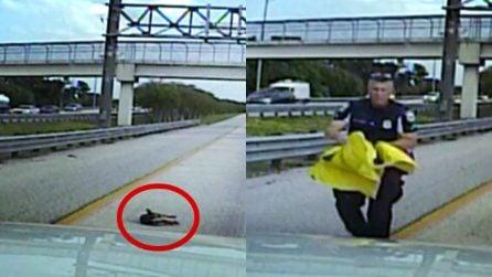 Cane investito in autostrada. Nessuno si ferma, poliziotto eroe gli salva la vita