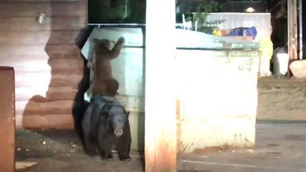 Cucciolo d'orso intrappolato in un cassonetto. Tre agenti e l'amore di mamma orsa lo tirano fuori