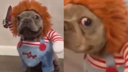 Il cane vestito come Chucky, il travestimento più divertente per Halloween