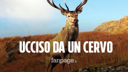 Cacciatore ucciso da un cervo a cui aveva sparato e che credeva fosse morto