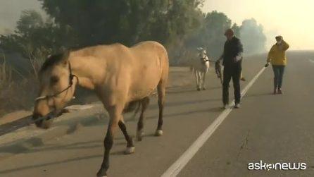 California, mandria di cavalli salvata dalla furia degli incendi