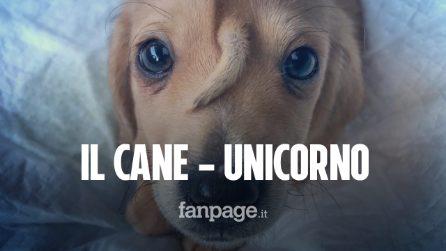 Il cane-unicorno con una coda sulla testa: abbandonato in strada e salvato dai volontari