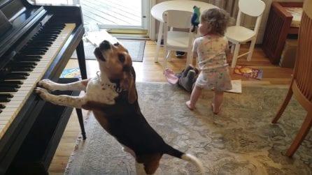 Il cane suona il pianoforte e la bimba balla: il video diventa virale