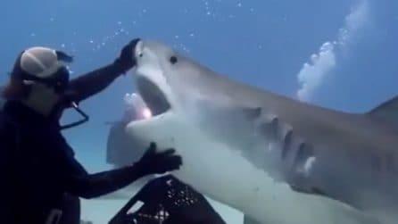 Il sub si avvicina allo squalo: la reazione del grosso pesce viene ripresa dalle telecamere