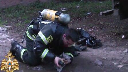 Il gattino rischia di morire asfissiato, il pompiere gli salva la vita