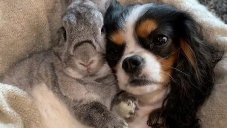 L'amicizia tra una cagnolina e una coniglietta: un legame che va oltre ogni diversità