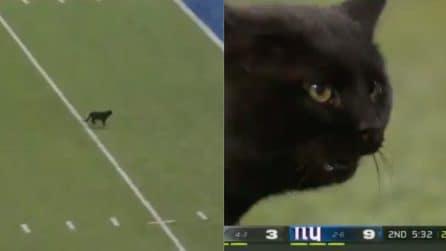 Il gatto entra in campo e fa touchdown: lo stadio impazzisce