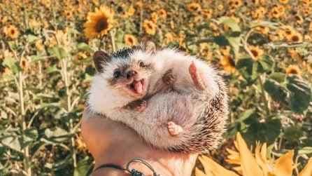 Herbee, il riccio più felice del mondo, sorride grazie all'amore della sua padrona