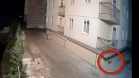 Albania, il gatto prevede la scossa pochi secondi prima: poi il palazzo sobbalza su stesso