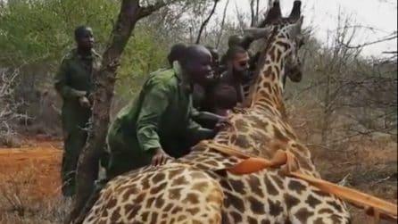 Ciò che succede quando persone aiutano animali a cui altre persone hanno fatto del male