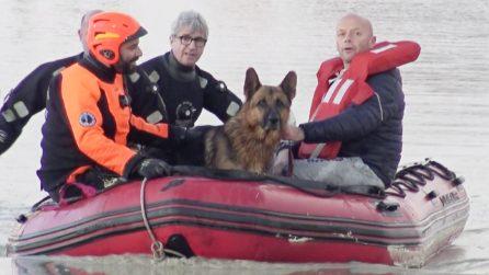 Il loro cane è intrappolato nella casa allagata: l'emozionante salvataggio dei vigili del fuoco