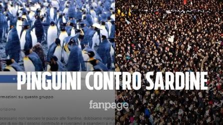 """Nascono i Pinguini contro le Sardine: """"Vogliamo un'Italia sovranista, dobbiamo mangiarcele"""""""