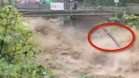 Il fiume in piena trascina via tutto: le piogge fanno paura