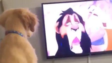 La tenera reazione del cagnolino che guarda il Re Leone