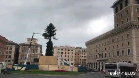 A Roma è tornato Spelacchio, albero di Natale 2019 a costo zero