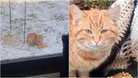Un gatto affamato si presenta davanti casa sua: la storia di un'amicizia che vi scalderà il cuore