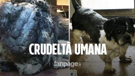 """Rinchiuso in un garage tra i suoi escrementi, cane salvato in condizioni disperate: """"Non respirava"""""""