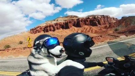 Il primo cane al mondo ad attraversare 50 stati con il suo padrone, a bordo di una moto