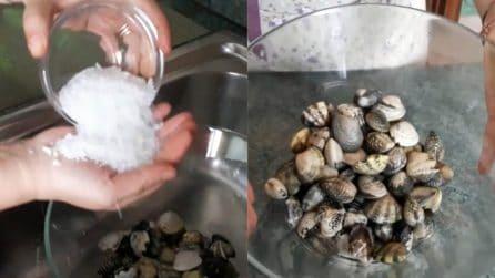Come pulire le vongole in maniera semplice e approfondita