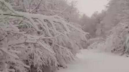 Dopo la nevicata è tutto imbiancato: un candido paesaggio che incanta tutti