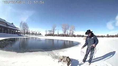 Finisce nel lago ghiacciato e rischia la vita: il piccolo cerbiatto viene salvato