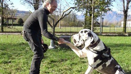 """Un cane """"gigante"""" lo aiuta ad affrontare il Parkinson: l'amore più forte della malattia"""