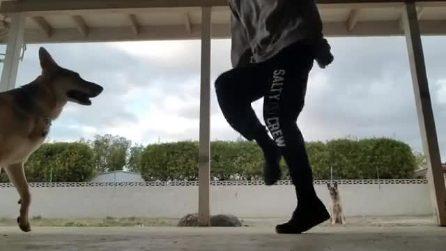 I cani sono fermi, ma quando la ragazza inizia a ballare ecco che fanno