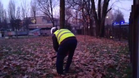 Milano, tagliati gli alberi del Politecnico in via Bassini: proteste di residenti e studenti
