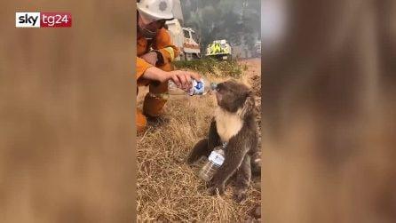 Australia, il pompiere spegne l'incendio e dopo disseta un koala