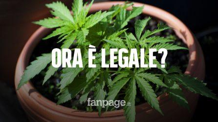 Ma ora la cannabis è legale? Tutto quello che c'è da sapere dopo la sentenza della Cassazione