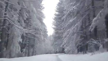Nel cuore della Sila: un bosco incantato ricoperto da un manto bianco