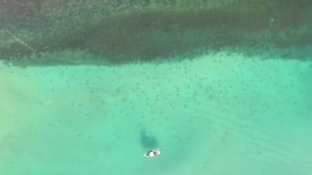 Centinaia di squali in agguato, a poca distanza ci sono i bagnanti