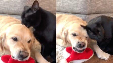 """Il gatto prova a dimostrare il suo affetto ma il cane sembra non """"gradire"""""""