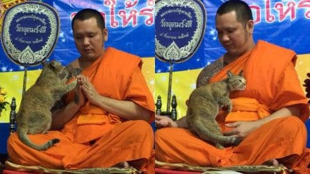Il gatto disturba la preghiera, la reazione del monaco tibetano