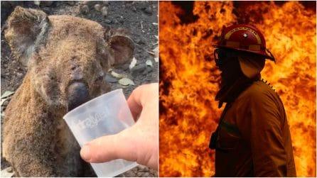 Incendi in Australia, mezzo miliardo di animali uccisi: una sconfitta per l'umanità