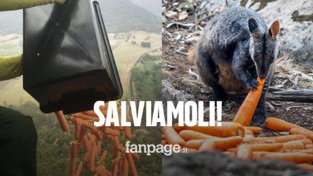 Incendi in Australia, cibo lanciato dall'alto per salvare gli animali: il fumo si vede dallo spazio