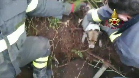 Due cagnolini sepolti sotto terra: li salvano i vigili del fuoco